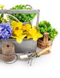 Spring flower and tool for flower-growing Stock Images