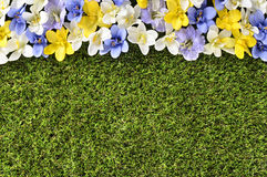 Spring flower top edge border background, grass copy space Royalty Free Stock Photography
