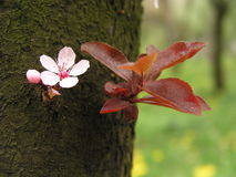 Spring flower on tree bark royalty free stock image