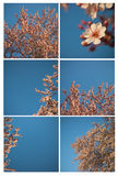 Spring flower on a tree collage. Collage of six flower pictures Stock Photo