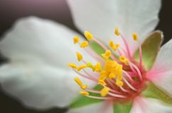 Spring flower on tree. Royalty Free Stock Photography