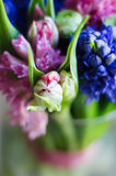 Spring flower tulip in bouquet macro soft Royalty Free Stock Photo