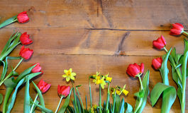Spring Flower wood background Stock Images