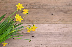 Spring Flower wood background Royalty Free Stock Photo
