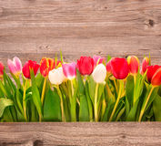 Spring flower on wooden background Royalty Free Stock Photos