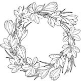 Spring flower wreath of crocuses. Vector elements isolated. Black and white image for adult relaxation. Image for design of cards. Spring flower wreath of Stock Images