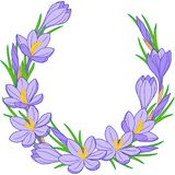 Spring flower wreath of crocuses. Vector elements isolated. Spring flower vignette of crocuses. Vector elements isolated for wedding, 8 march, women`s day Royalty Free Stock Images