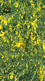 Yellow flowers in garden. The beauty in nature stock photo