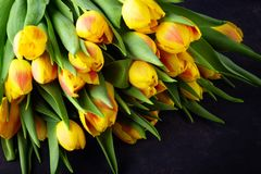 Spring flower yellow red tulips bouquet. On dark background royalty free stock images
