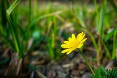 Spring flower Stock Images