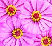 Spring flowerbed Stock Image