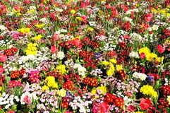 Spring flowerbed. Stock Images