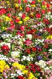 Spring flowerbed. Stock Image