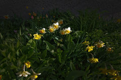 Spring flowerbed Royalty Free Stock Image