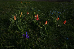Spring flowerbed royalty free stock photography
