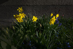 Spring flowerbed Stock Images