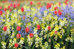 Spring flowerbed Royalty Free Stock Photos