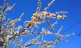Spring flowering Stock Photo