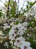 Spring flowering. Blossom stock image