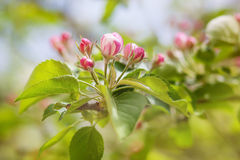 Spring flowering. Blurring background, Stock Images