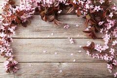 Free Spring Flowering Branch Stock Photo - 53631690