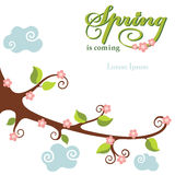 Spring  flowering branch background Royalty Free Stock Photo