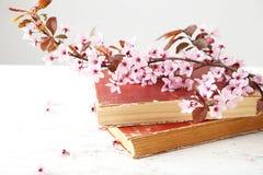 Spring flowering branch Royalty Free Stock Photos