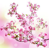 Spring flowering branch Stock Images