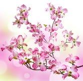 Spring flowering branch Stock Images