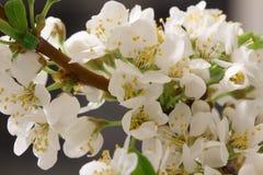 Spring flowering Stock Images