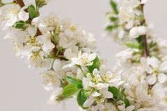 Spring flowering Royalty Free Stock Photography
