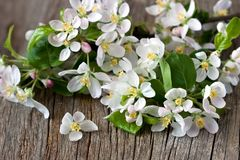 Branch with apple flowers on old wooden background Stock Photos