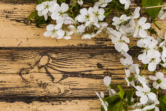 Spring flowering branch on wooden background. Royalty Free Stock Photo