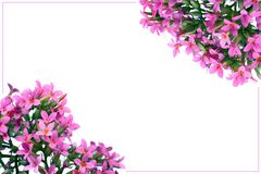 Spring flowering branches. Spring flowering isolated pink frame on white Stock Photography
