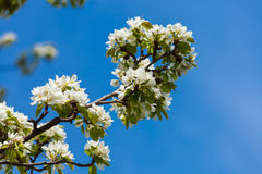 The spring flowering Stock Images