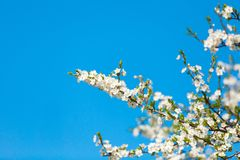 The spring flowering Royalty Free Stock Photos