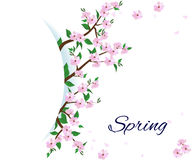Spring flowering branches of trees Royalty Free Stock Photo