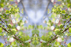 Spring Flowering Crab Apple (creative composite) Stock Photos