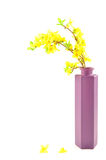 Forsythia in purple vase Stock Photography