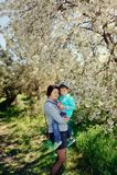 Spring flowering garden Stock Images