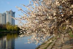 Spring flowering trees Stock Image