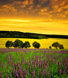 Spring flowering meadow. At sunset Royalty Free Stock Photography