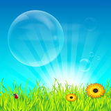 Spring flowering meadow and transparent bubbles Royalty Free Stock Images