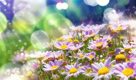 Spring flowering meadows and sunbeam background Stock Images