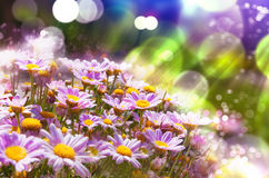 Spring flowering meadows and sunbeam background Royalty Free Stock Images