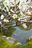 Spring flowering peach tree Royalty Free Stock Image