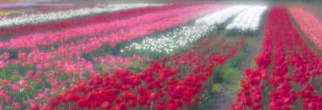 Spring-flowering time Royalty Free Stock Photos