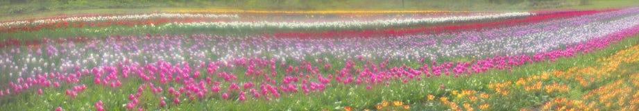 Spring-flowering time beautiful garden flowers Royalty Free Stock Image