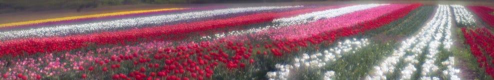 Spring-flowering time beautiful garden flowers Stock Image