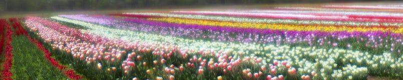 Spring-flowering Royalty Free Stock Images